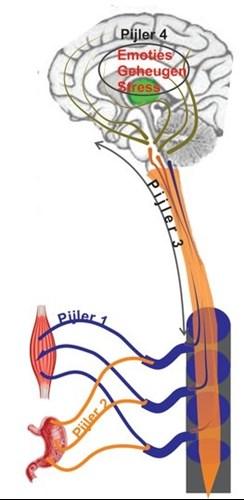 pijn-input pijlers